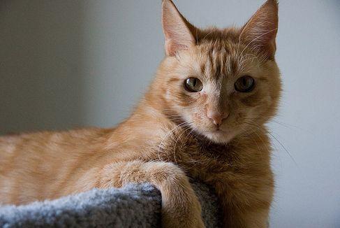 sup_cat_02.jpg