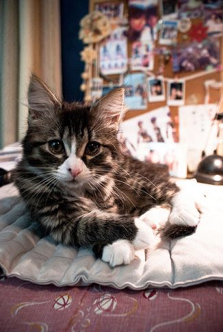 sup_cat_03.jpg