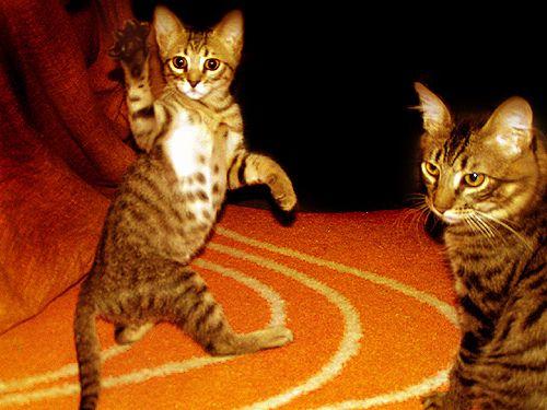 sup_cat_04.jpg