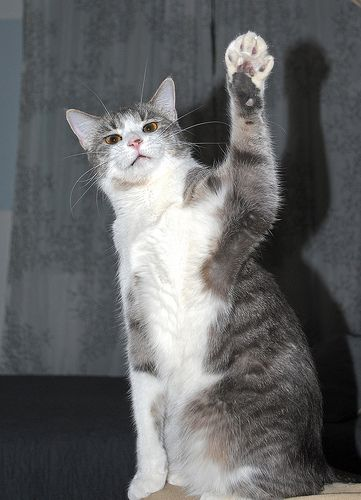 sup_cat_08.jpg