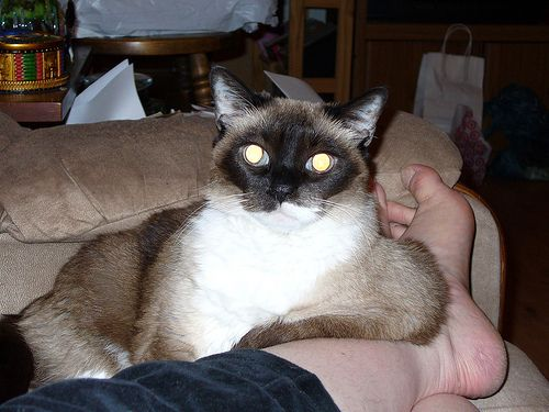 sup_cat_09.jpg