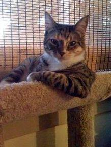 sup_cat_11.jpg