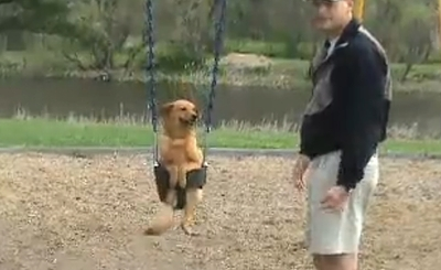 swing_dog.jpg
