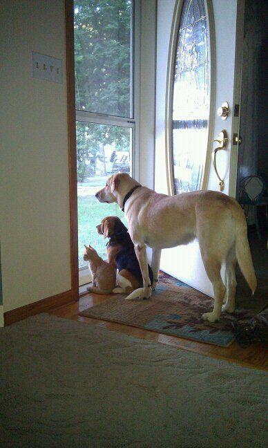 three_pets.jpg