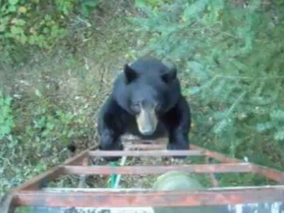 tree_bear.jpg
