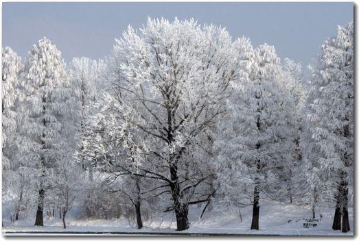寒い冬が今年もやってきた