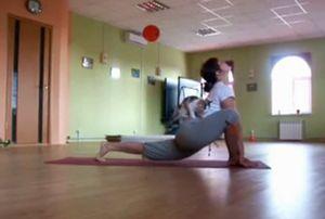 yoga_and_cat.jpg