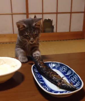 sanma_vs_cat.png