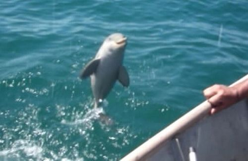Baby_Dolphin_Rescued.jpg