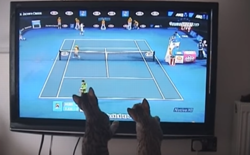 Bengal_cats_play_tennis .png