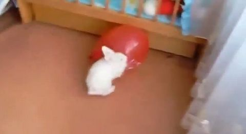 Bunny_Confused_After_Balloon_Pops.jpg