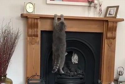 Cat_Cant_Climb_Fireplace_Mantle.jpg