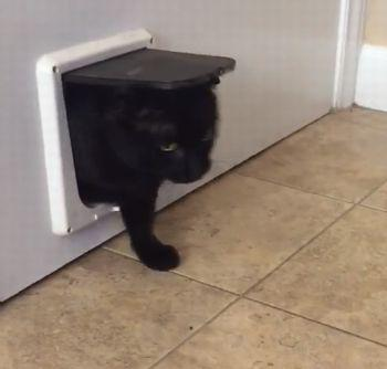 Cat_Gets_Stuck _in _pet_Door.jpg
