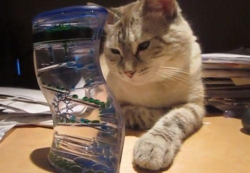 Cat_completely_mesmerized_by_bubble_timer.jpg
