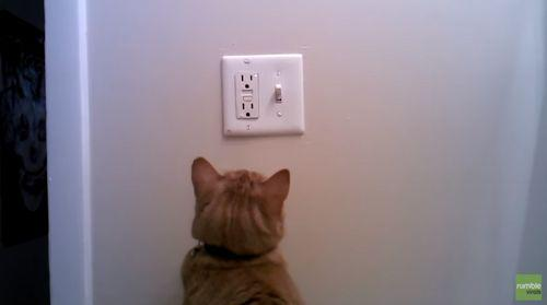 Cat_determined_to_save_electric_energy.jpg