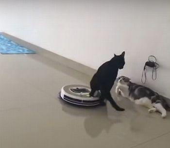 Cats_with_a_Roomba.jpg