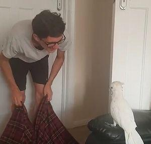 Cockatoo_reaction.jpg