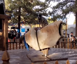 Dog_Masters_Mechanical_Bull.png