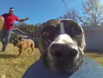 Dog_running_around_with_a_gopro.jpg