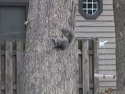 Fly_slide_squirrel.jpg