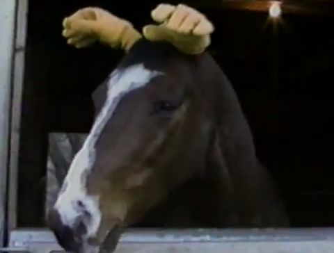 Horse_has_human_hands_for_ears.jpg
