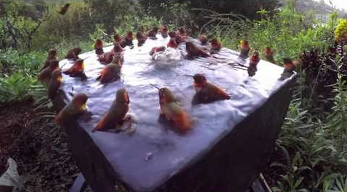 Hummingbird_Pool_Party.png