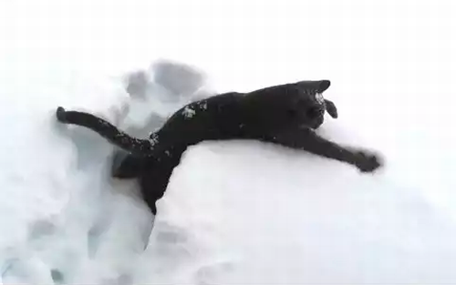 Kitten_Discovering_Snow_For_The_First_Time.png