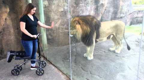 This_Lion_Really_Wants_Her_Scooter.jpg