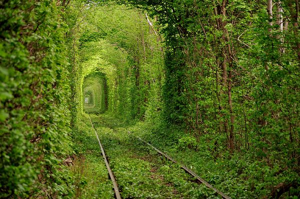 Tree_Tunnel_01.jpg