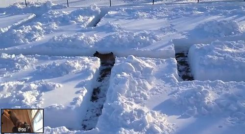 dog_in_snow_maze.jpg