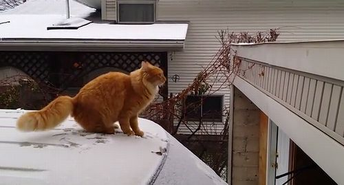 Cat_Fails_Jump_From_Snow-Covered_Car.jpg