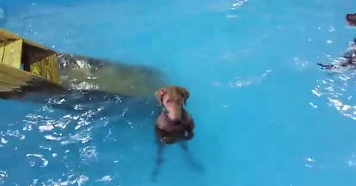 non_swimming_dog.jpg