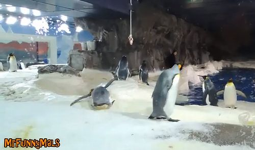 Clumsy_Penguins_Compilation.jpg