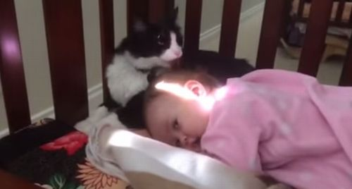 kitty_cleaning_toddler.jpg
