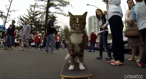 CAT_Super_Skateboarding.jpg