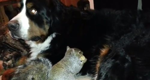 Pet_Squirrel_wally.jpg