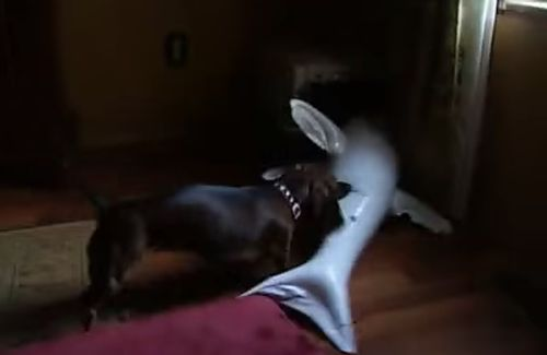 Dachshund_attacks_a_shark.jpg