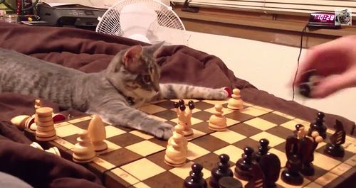 cats_playing_chess.jpg