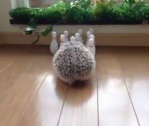 Bowling_with_Hedgehog.jpg
