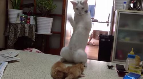 standing_fight_cat.jpg
