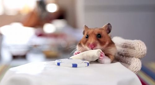 Hamster_Eating_Burrito.jpg