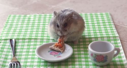 Tiny_hamster_eating_a_tiny_pizza.jpg