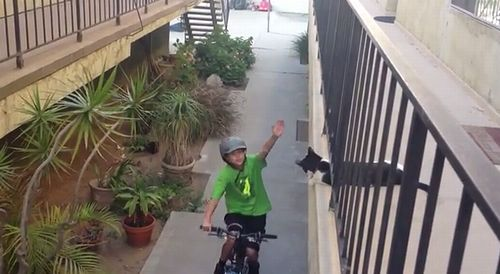 Cat_High_Fives_Kid_on_Bike.jpg
