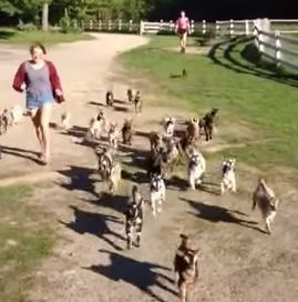 The_Running_of_the_Goats.jpg