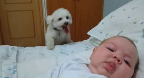 Puppy_tries_his_best_to_see_newborn_baby.jpg