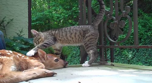 Kitten_and_a_deer.jpg