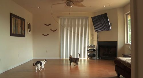 Kitties_Dance_with_Ceiling_Fan.jpg