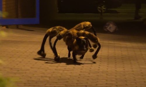 Mutant_Giant_Spider_Dog_prank.jpg
