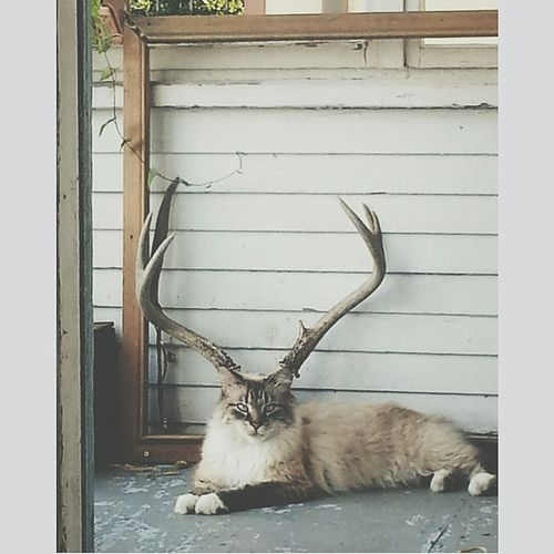 My_cat_lined_up_perfectly_with_the_deer_skull.jpg