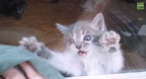 Adorable_kitten_freaks_out_over_window_cleaning.jpg